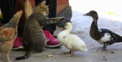 Pet Foods & Animal Feeds